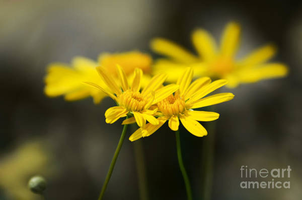 Photograph - An Organic Connection by Jorgo Photography - Wall Art Gallery
