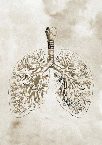 Lung Digital Art - Anatomical Lungs Xxxx by Erzebet S
