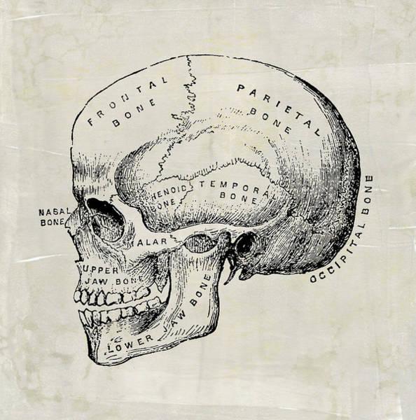 Digital Art - Anatomical Skull Medical Art by Renee Hong