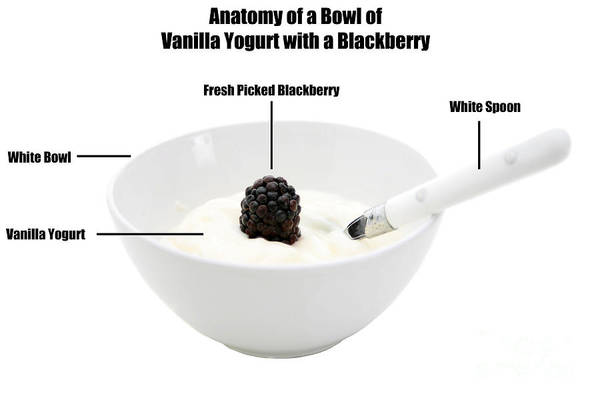 Wall Art - Photograph - Anatomy Of A Bowl Of Vanilla Yogurt With A Blackberry by Michael Ledray