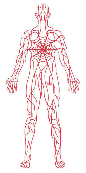 Adult Drawing - Anatomy Of Human Body And Spider Web by Timothy Goodman