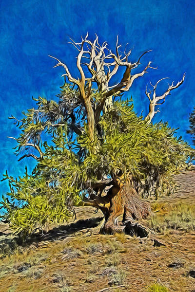 Mixed Media - Ancient Bristlecone Pine by Frank Lee Hawkins