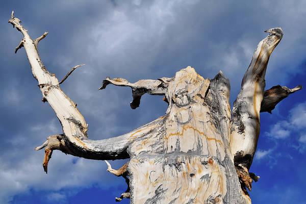 Photograph - Ancient Bristlecone Pine Sky by Kyle Hanson