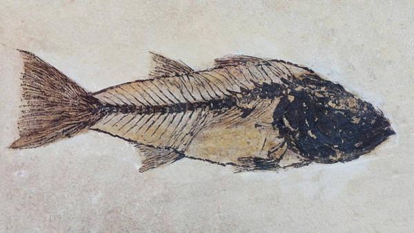 Digital Art - Ancient Fish by Julian Perry