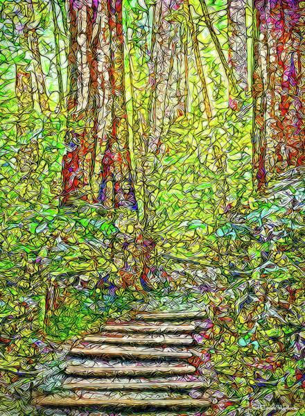 Ancient Forest Path - Tamalpais California Art Print