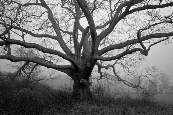 Photograph - Ancient Oak Tree V - Sheep Pasture by David Gordon