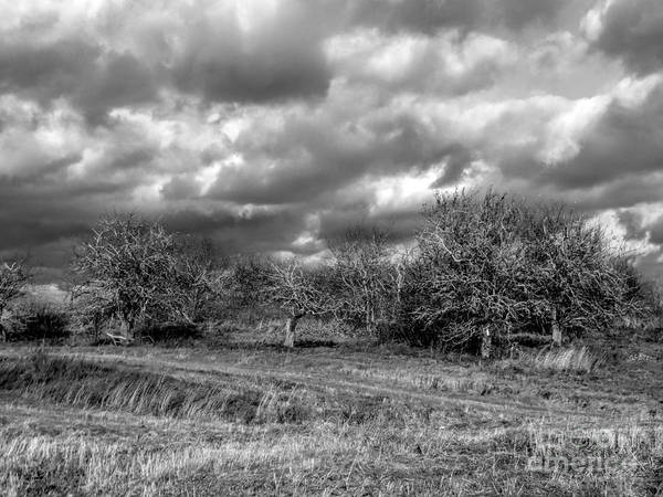 Aroostook Photograph - Ancient Orchard by William Tasker