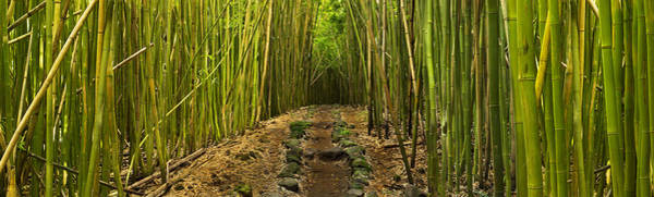 Queens Bath Photograph - Ancient Passage Bamboo Forest Maui Hana Rainforest by Sun Gallery Photography Lewis Carlyle