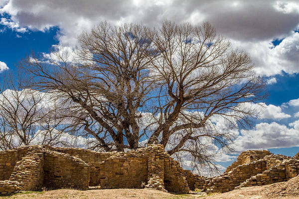 Photograph - Ancient Tree by Ron Pate