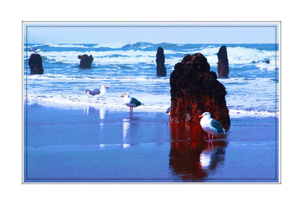Ancient Trees And Seagulls At Neskowin Beach Art Print by Margaret Hood