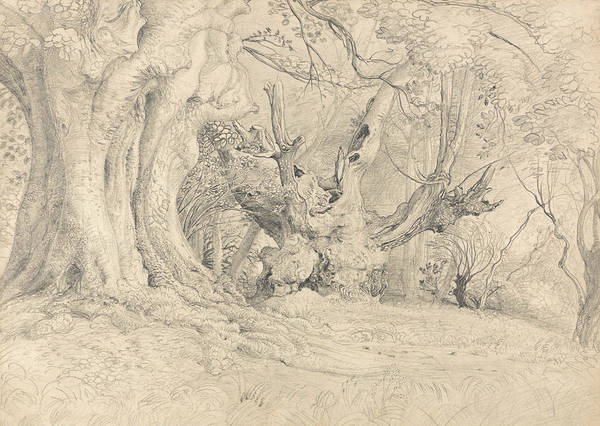 Drawing - Ancient Trees, Lullingstone Park by Samuel Palmer