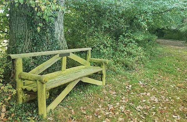 Peace Wall Art - Photograph - Woodland Seat by Rowena Tutty