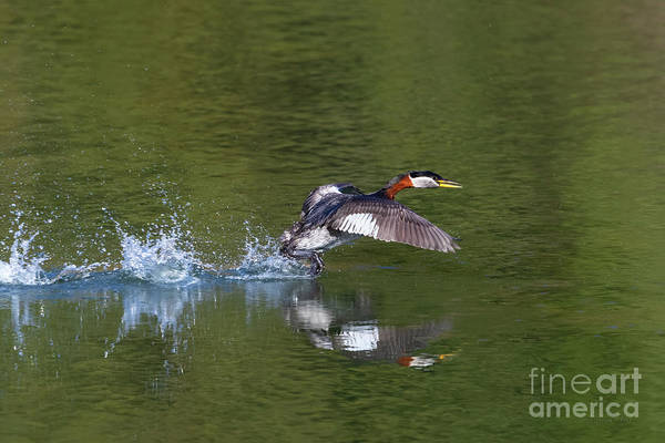 Photograph - And They're Off by Beve Brown-Clark Photography