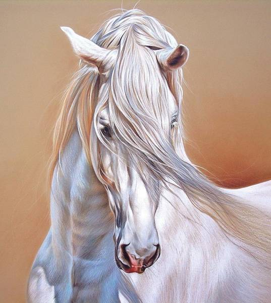 Andalusian - Detail Art Print