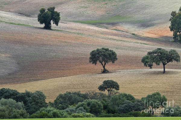 Andalusian Wall Art - Photograph - Andalusian Landscape by Heiko Koehrer-Wagner