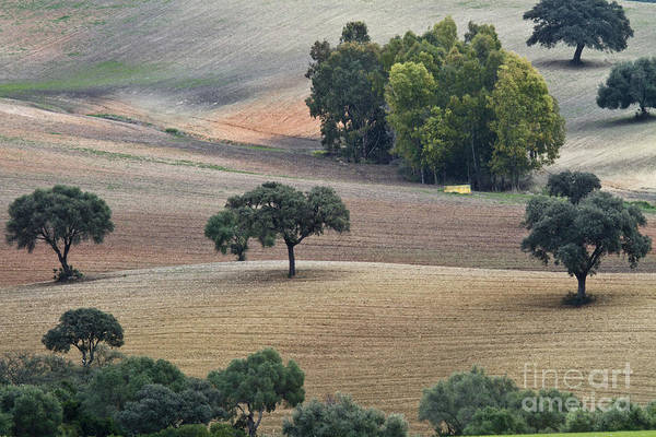 Photograph - Andalusian Meadows 1 by Heiko Koehrer-Wagner