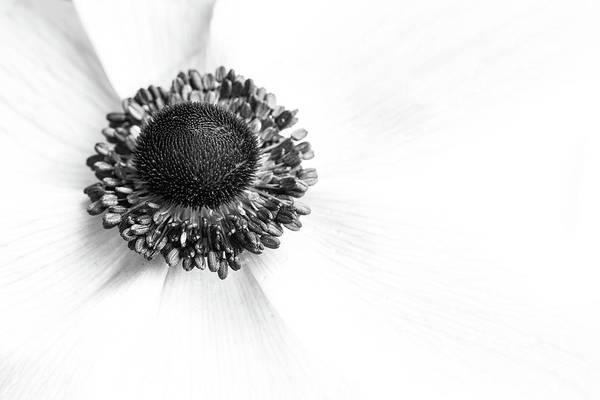 Photograph - Anemone Bloom by Kristen Wilkinson