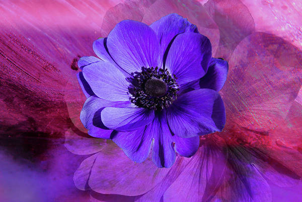 Wall Art - Digital Art - Anemone In Purple by Terry Davis