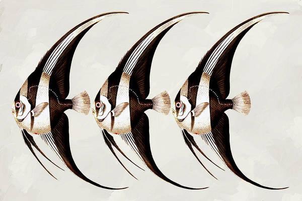 Mixed Media - Angel Fish In A Row Wall Art by Isabella Howard