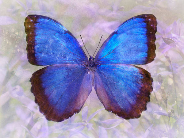 Photograph - Angel In Blue by Leda Robertson