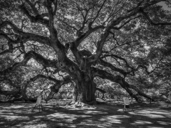 Photograph - Angel Oak 002 by Lance Vaughn