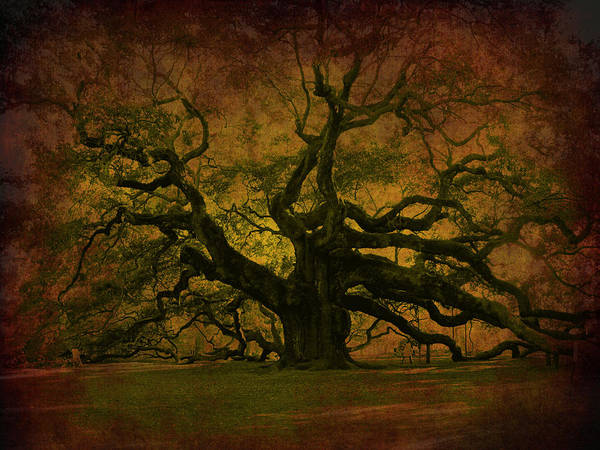 Artful Photograph - Angel Oak 3 Charleston by Susanne Van Hulst