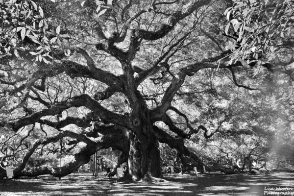Photograph - Angel Oak Black And White by Lisa Wooten