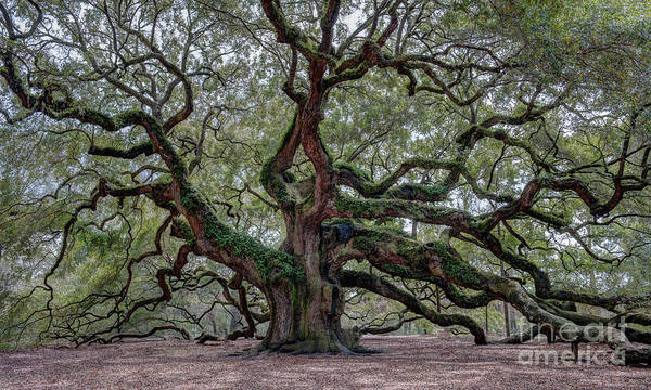 Photograph - Angel Oak Tree Of Life by Dale Powell
