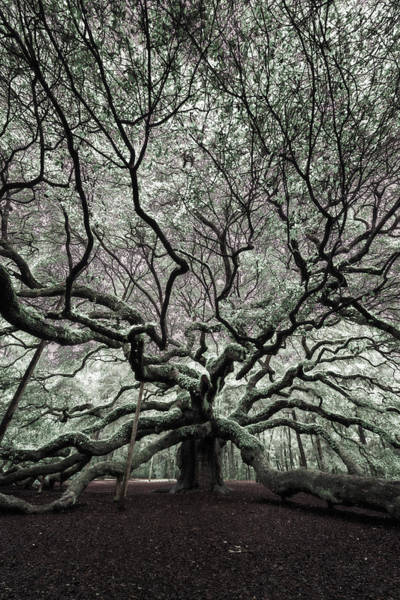 Photograph - Angel Oak In Infrared by Rick Berk
