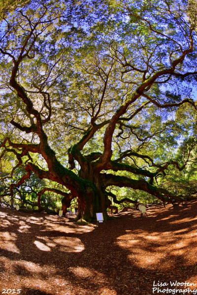 Photograph - Angel Oak Johns Island by Lisa Wooten