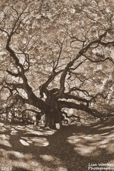 Photograph - Angel Oak Johns Island Sepia by Lisa Wooten
