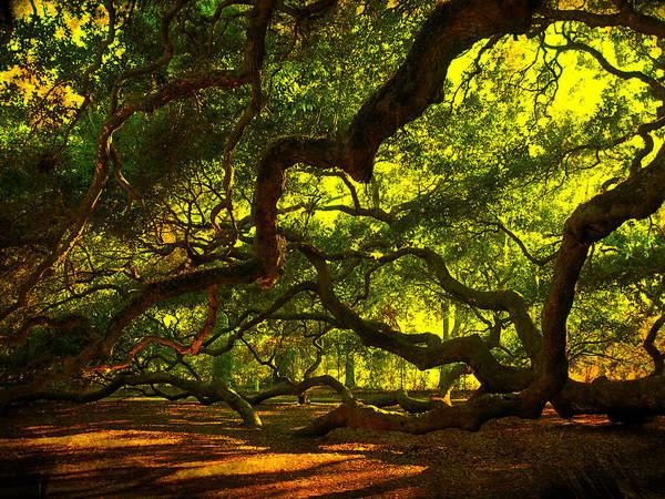 Angel Oak Limbs 2 Art Print