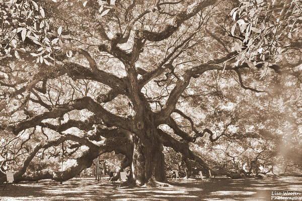Photograph - Angel Oak Sepia by Lisa Wooten
