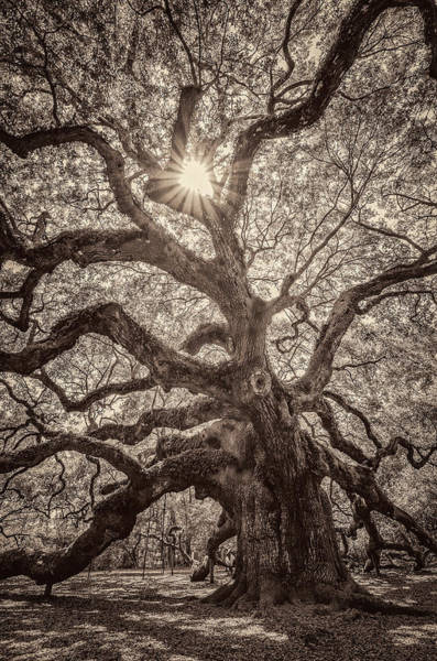 Alive Photograph - Angel Oak- Sun Beam  by Drew Castelhano