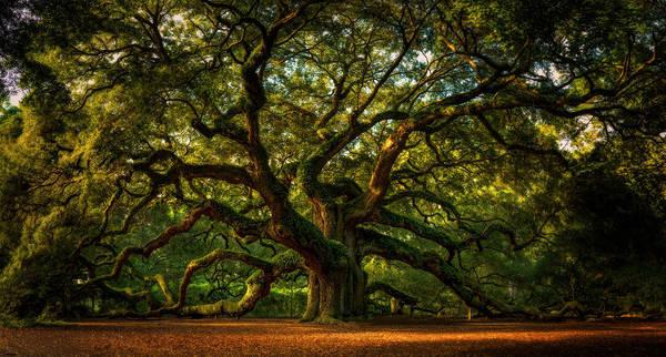 Oak Trees Photograph - Angel Oak by Taylor Franta
