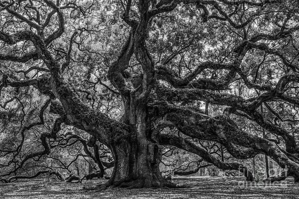 Photograph - Angel Oak Tree Americana by Dale Powell