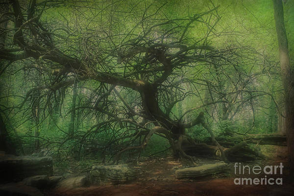 Impressionistic Vineyard Wall Art - Photograph - Angel Oak Tree - Arrington Vineyard by Luther Fine Art