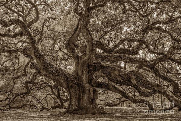 Photograph - Angel Oak Tree Patina by Dale Powell