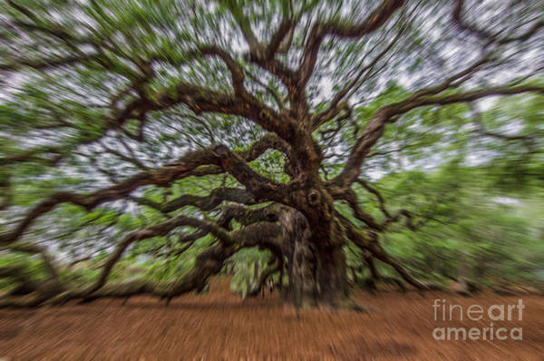 Photograph - Angel Oak Tree Zoom by Dale Powell