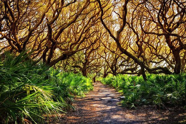 Photograph - Angel Oaks In Sunshine by Debra and Dave Vanderlaan