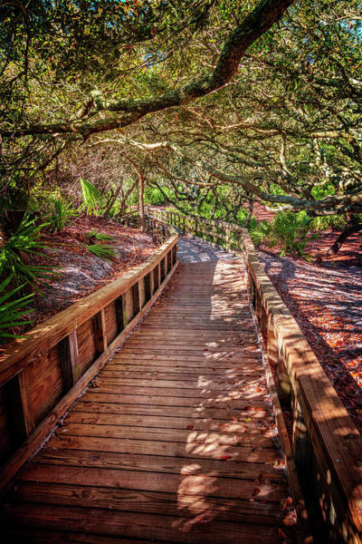 Photograph - Angel Oaks Over The Boardwalk by Debra and Dave Vanderlaan