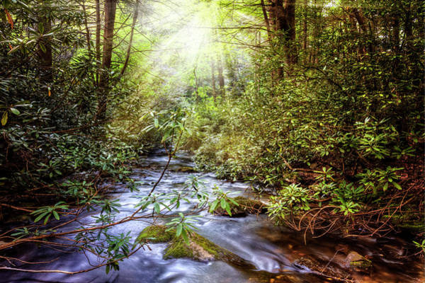 Nantahala Photograph - Angels In The Forest by Debra and Dave Vanderlaan