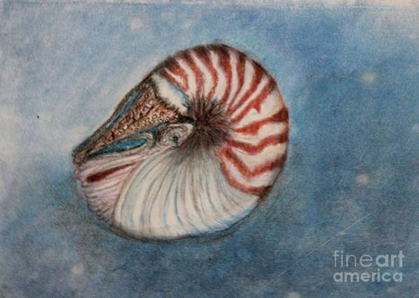 Angel's Seashell  Art Print