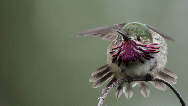 Photograph - Angry Bird by Ian Johnson