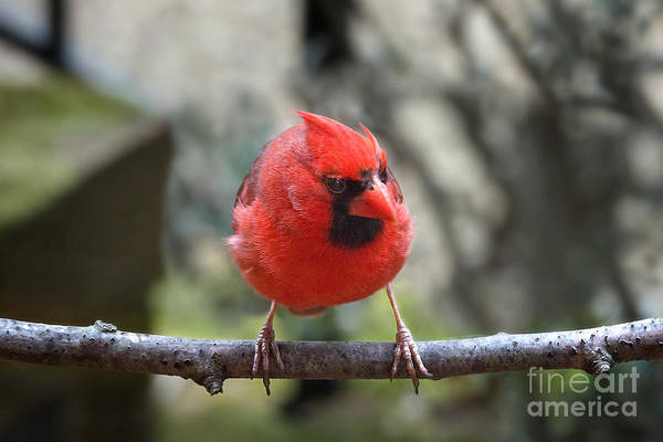 Photograph - Angry Bird by Jemmy Archer