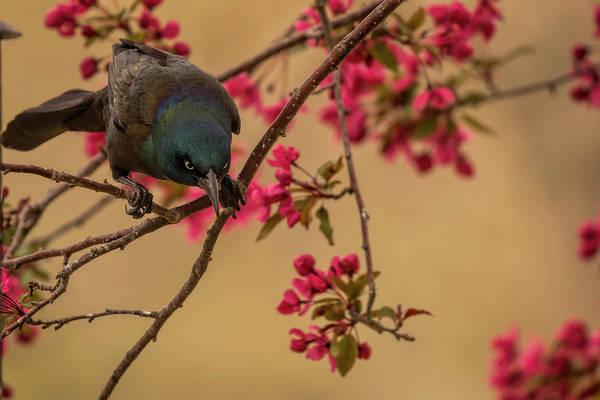 Photograph - Angry Bird by Scott Bean