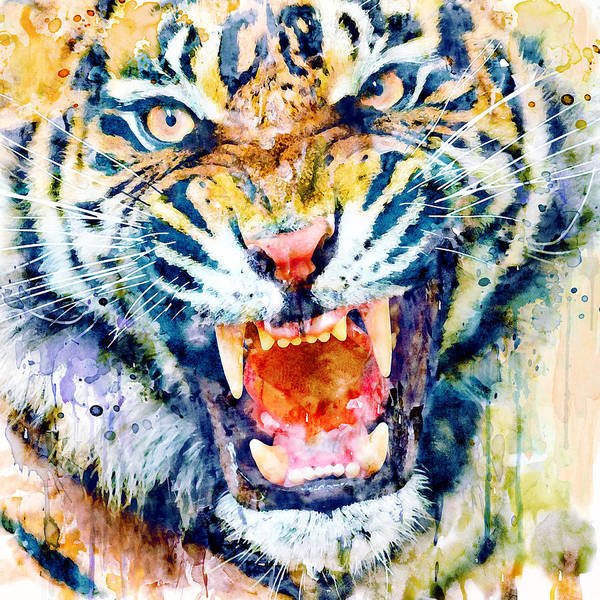 Bengal Tiger Painting - Angry Tiger Watercolor Close-up by Marian Voicu