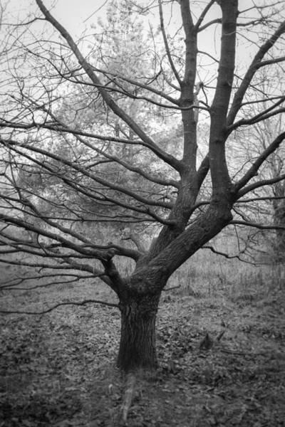 Nottinghamshire Photograph - Angular by Chris Dale