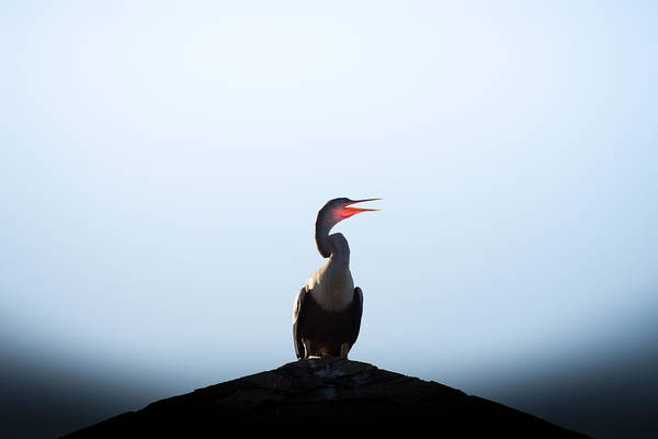 State Park Photograph - Anhinga by Ivo Kerssemakers
