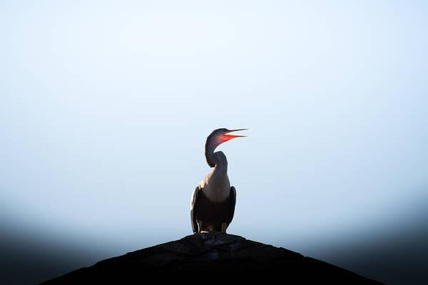 Huntington Beach Photograph - Anhinga by Ivo Kerssemakers